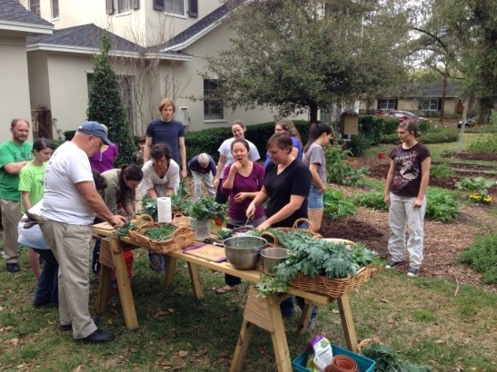 Winter Park Urban Farmers and guests creating a delicious massaged kale salad wrap.